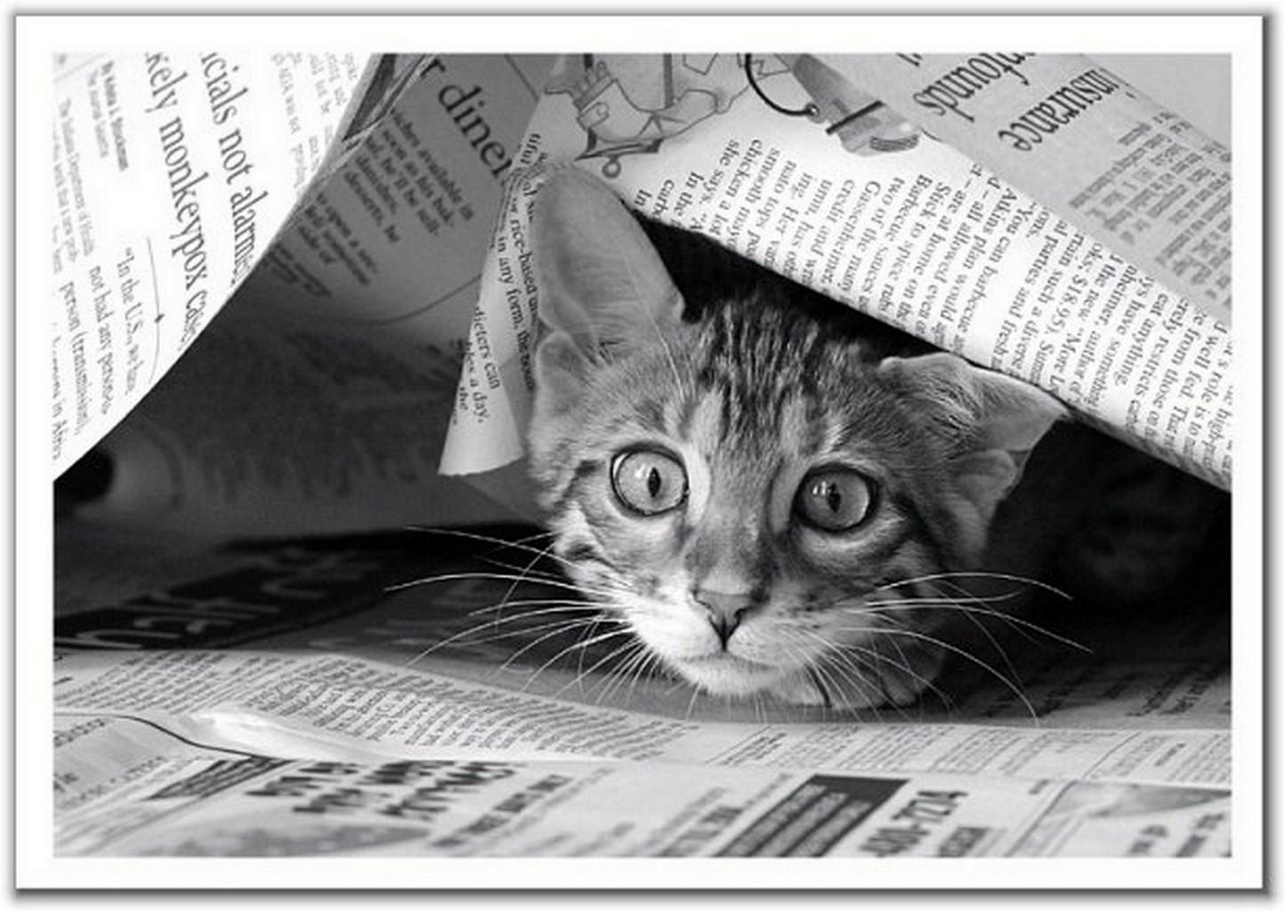 Прикольные картинки для газета